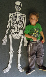 Student with paper skeleton in our kindergarten in Geelong